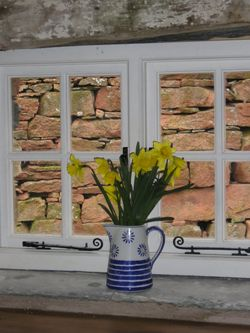 Wallabarrow Camping Barn. 35 jug of daffs